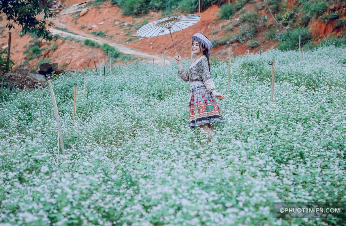 Cánh đồng hoa Tam Giác Mạch khiến giới trẻ mê mẩn